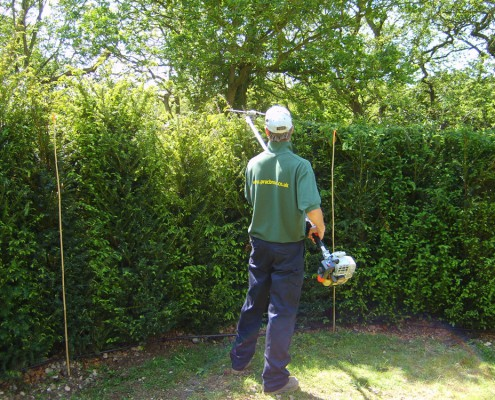 A practicality brown employee maintaining an instant hedge