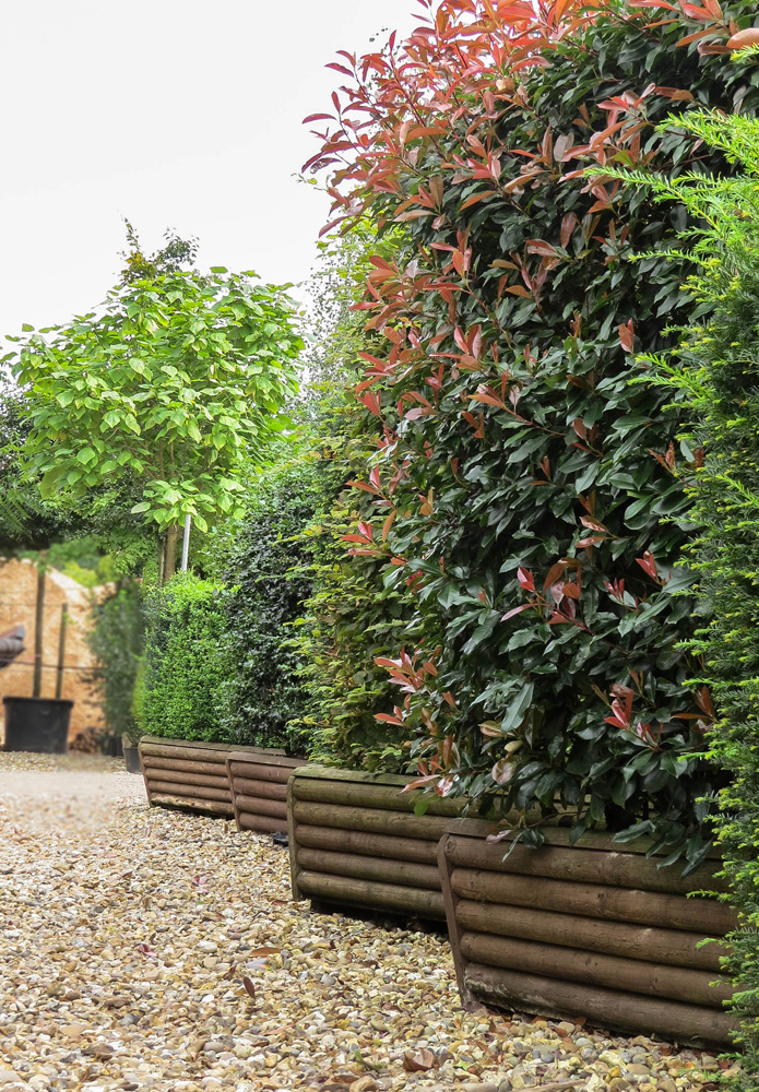 Instant Hedge - Mature Ready Grown Hedges From Practicality