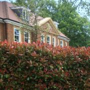 Mature Hedges supplied and planted