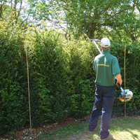 An image of a man maintaining his instant hedge