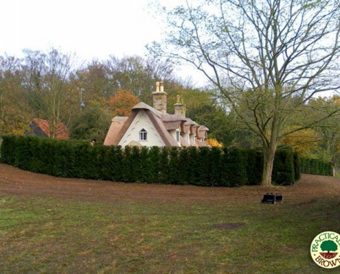 Our yew instant hedge providing screening for a cottage in the country