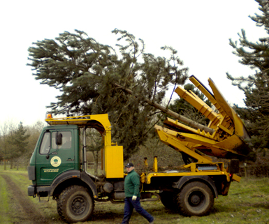 tree moving