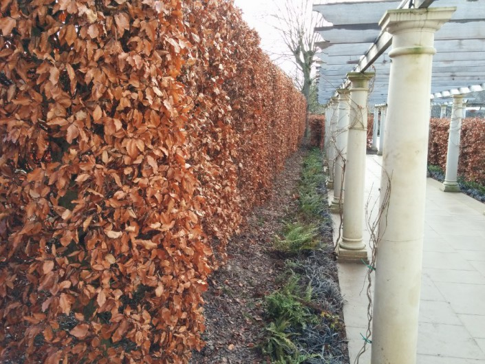 Image of a brown hedge