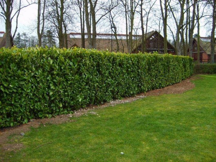 Instant Hedge planting complete