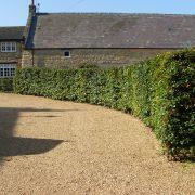 mature hedging