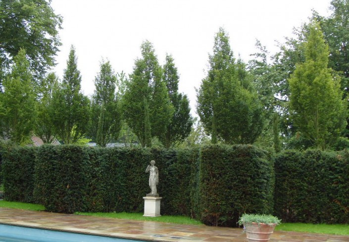 image of a Hedge Elements with trees