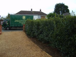 Holly Instant Hedge