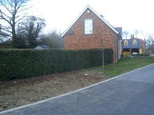 After Instant Hedge planting