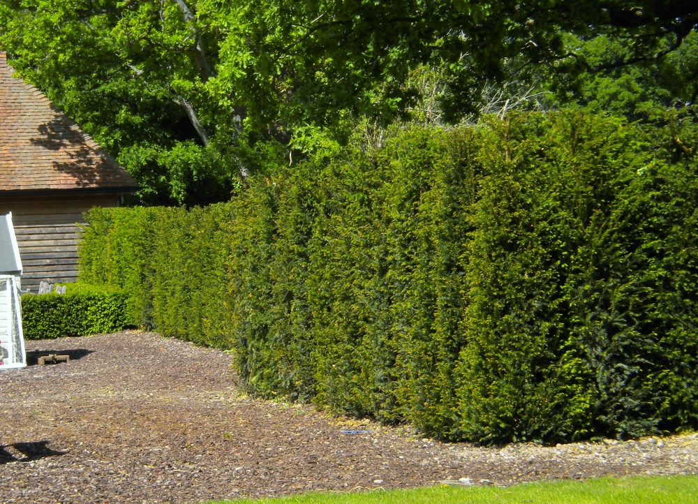 Vat Registered Company >> Individual Hedging Plants and Elements from Practicality Brown
