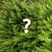Picture of an instant hedge leaf detail with a question mark over it