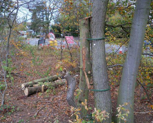 Careful ecological land clearance