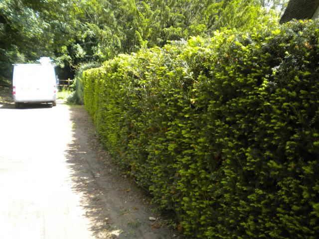 Evergreen screening instant hedge
