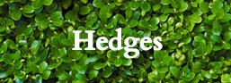 Link to hedges