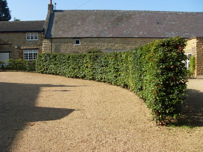 UK grown instant beech hedge
