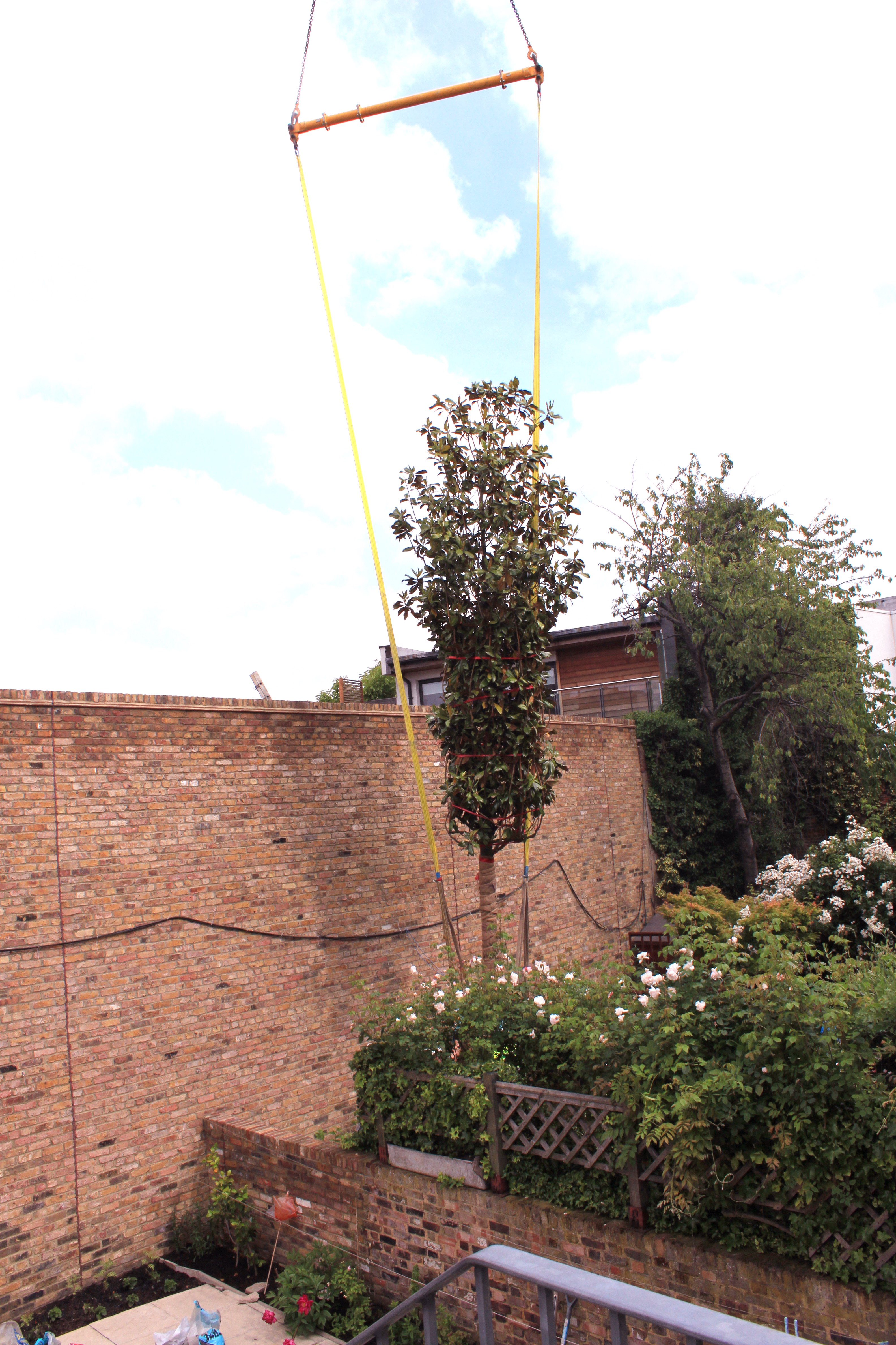 Trees craned into small gardens in london practicality brown for Garden trees london