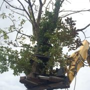 Tree clearance machinery