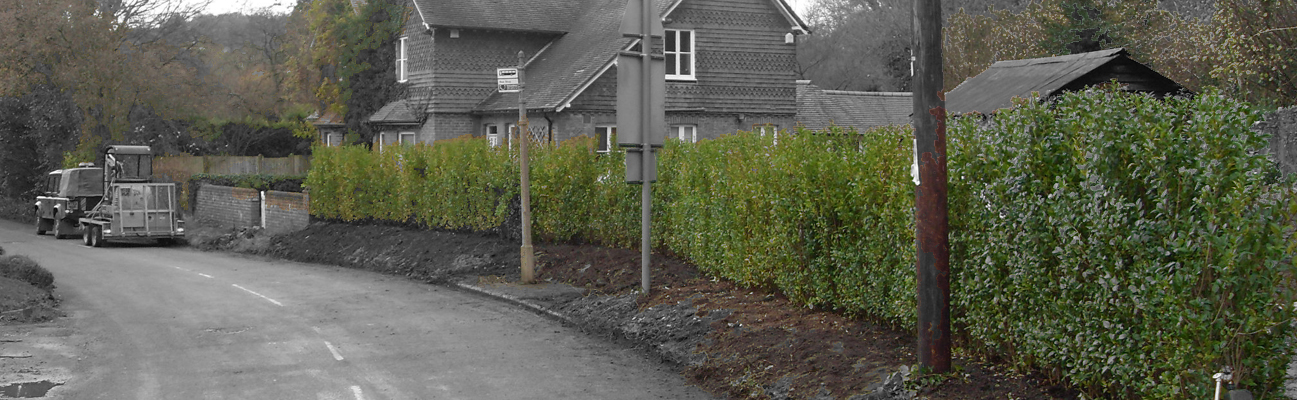 A clients example of our Evergreen Oval Leaf Privet Ligustrum ovalifolium
