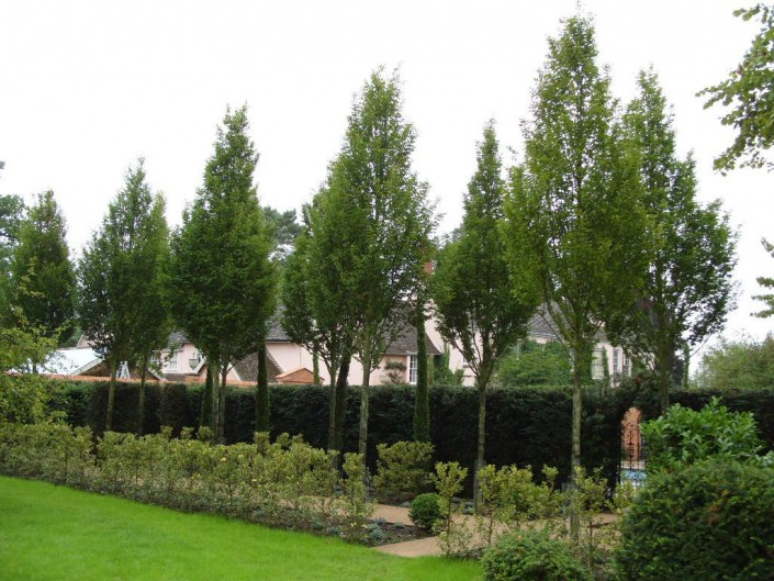 A row of specimen trees created as an installation