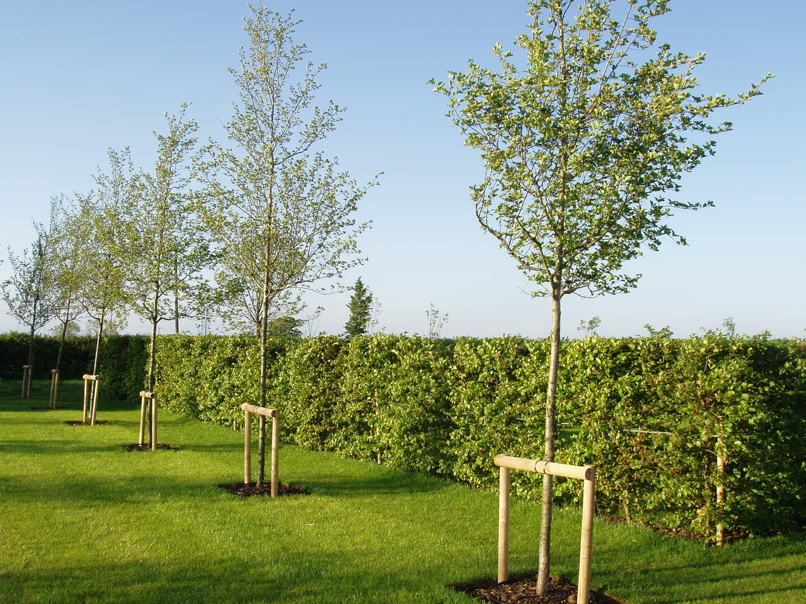 New Build Moving Hedge