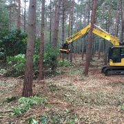 Clearing rhododendron in woodland