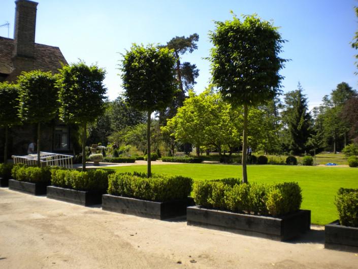 Specimen trees in planters