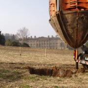 Historic Oak transplanting