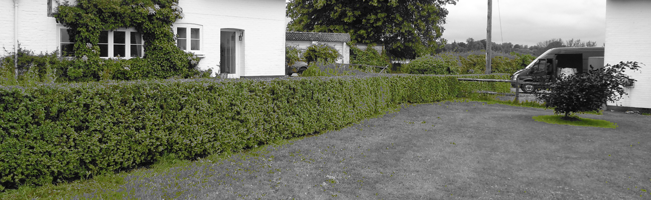 image of a box instant hedge installed out the front of a house