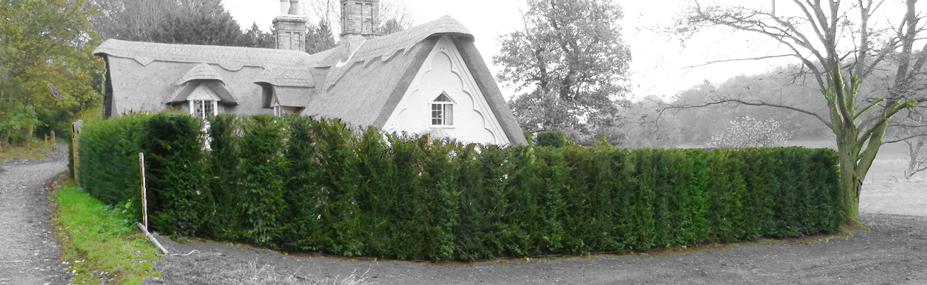 an image of an instant hedge offering shelter to a cottage within a field