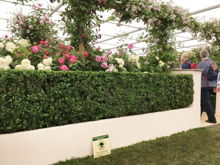 Box Instant Hedge on the David Austin Roses Show Stand at Chelsea