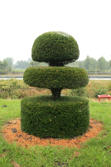 Special shaped topiary