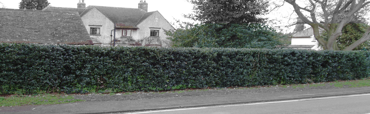 an image of an instant hedge screening a house from a main road