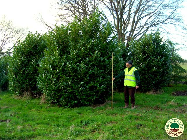 Screening Trees From Practicality Brown