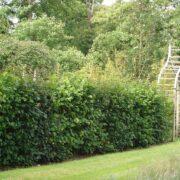 Native mix hedge in private garden