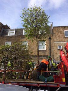 Preparing trees for lifting