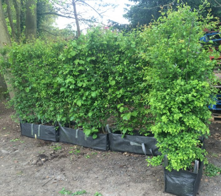 native mix Practical Instant Hedging