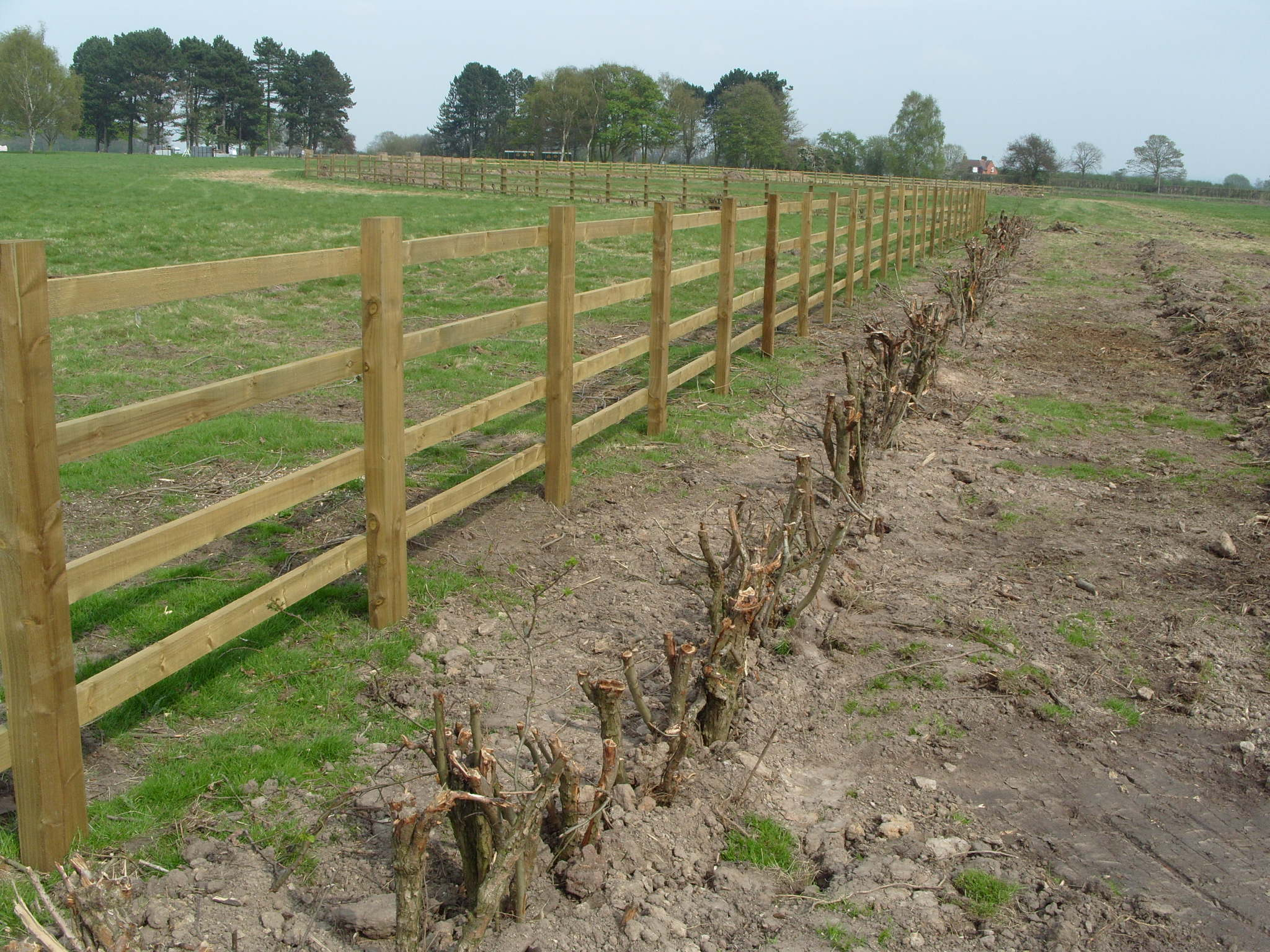 Hedges successfully transplanted