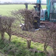 Hedges reduced for transplanting