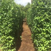 Native Mix Practical Instant Hedge