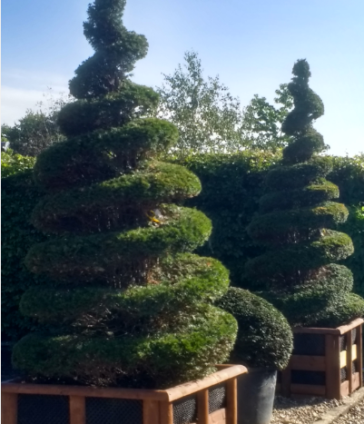 Topiary spirals