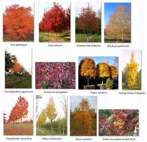 Best Autumn Trees