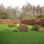 Fagus sylvatica instant hedging