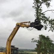 Tree clearance using tree shears