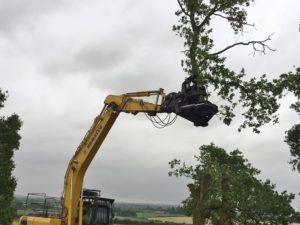 Tree clearance using tree shears