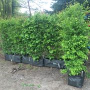 Practical Instant Hedge