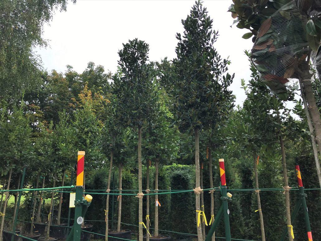 Screening trees create garden privacy